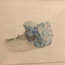 Clavel Azul I